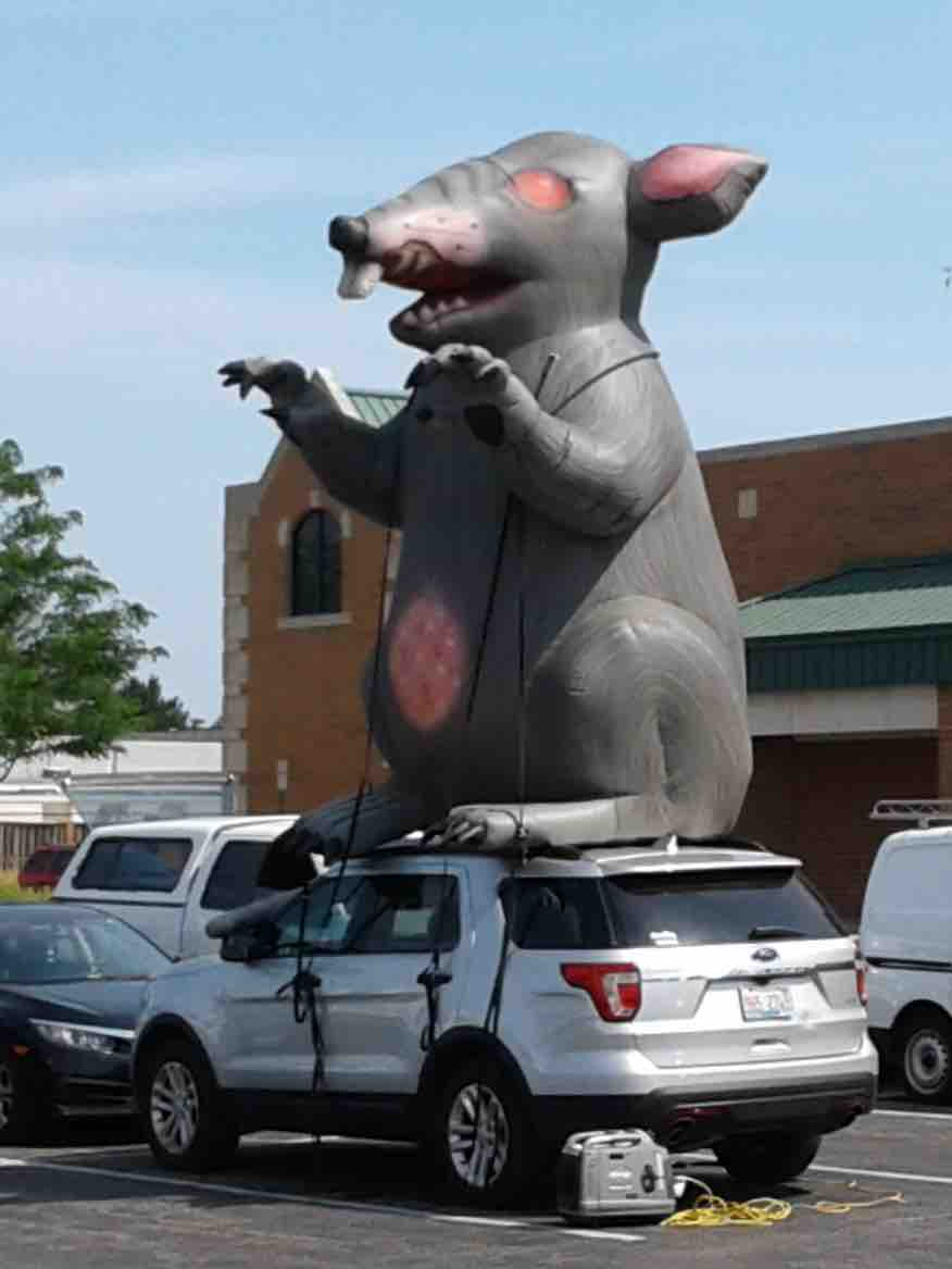 03 19 Rat